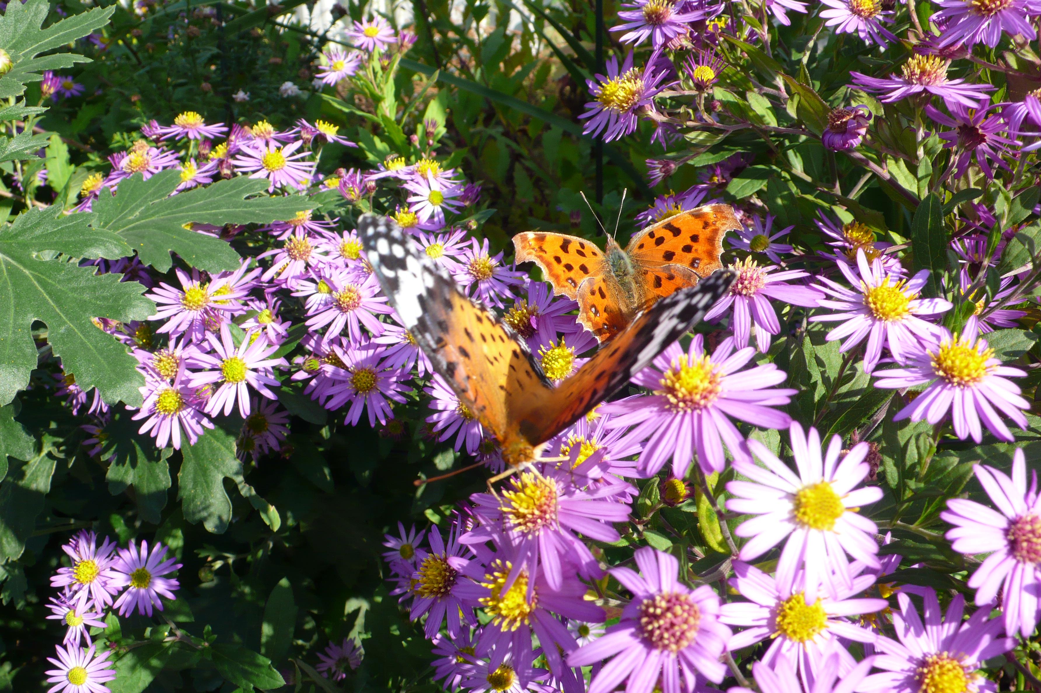 雄と雌が仲良く花の蜜を吸っています。