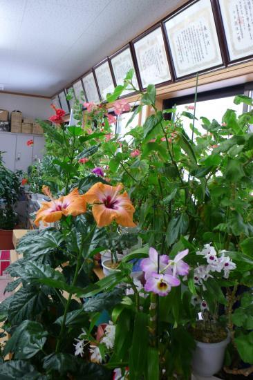 事務所の中はお花畑です