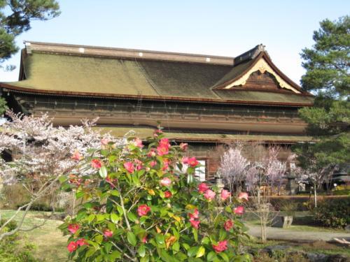 椿の花とと善光寺さん