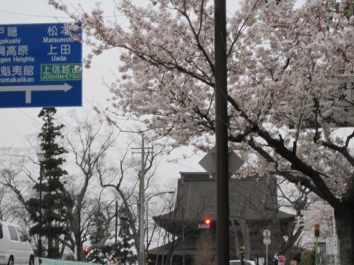 北参道の正面に善光寺があります