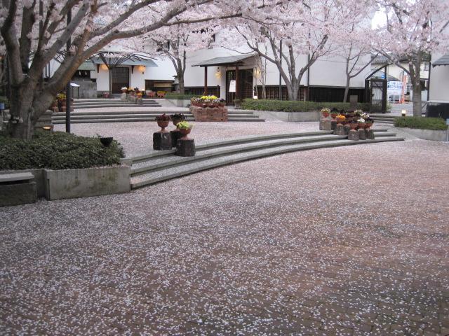 桜の花のじゅうたん