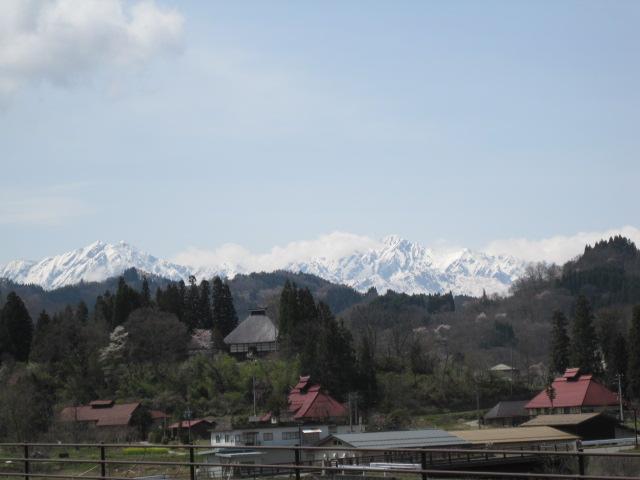 山桜の咲いている山の向こう側は、アルプスの連山が素晴しいです