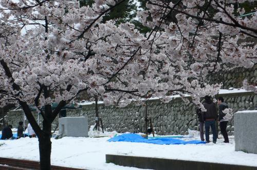 雪かきをしながら花見の場所取りをしていました