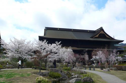 午後になったら天気も良くなり日がさして  善光寺の屋根の雪も溶けて  参拝客でにぎわっていました