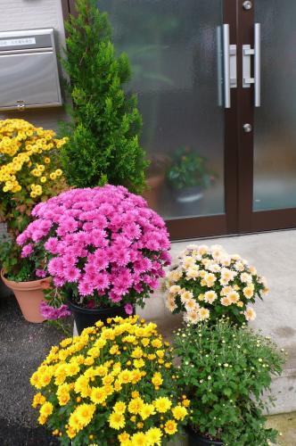 玄関の入り口も花ざかりです