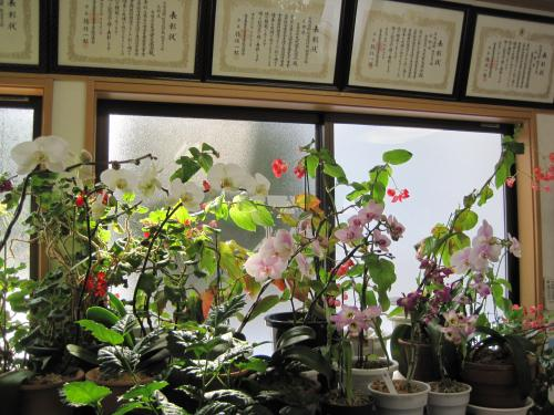 いろいろな花を楽しんでいます
