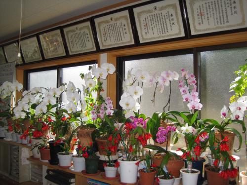 事務所の中は花盛りです