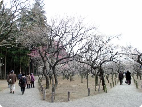 偕楽園で観梅02
