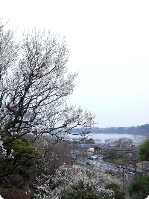 偕楽園で観梅03