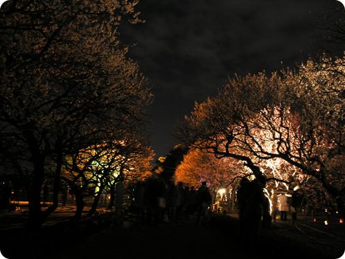 夜梅祭03