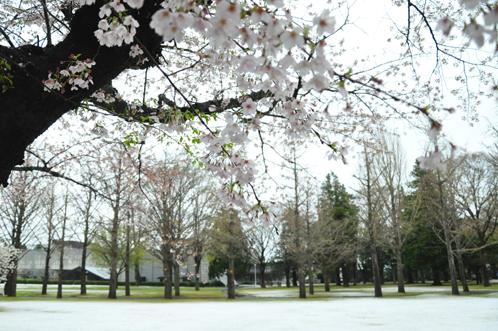 四月の雪01