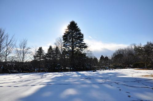 2011年1月15日水戸で初積雪08