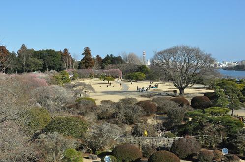 2011年2月24日偕楽園の梅だより12