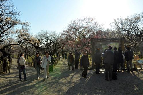 2011年2月24日偕楽園の梅だより11