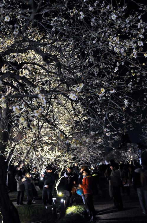 2011年偕楽園・夜梅祭07
