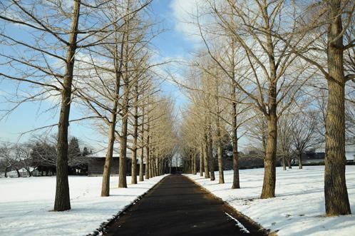 雪の茨城県立歴史館
