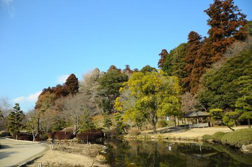 2012年2月22日偕楽園梅便り11