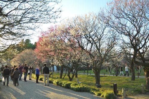 2012年3月27日の偕楽園・梅は8分咲きでほぼ満開12