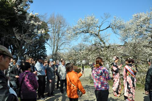 2012年3月27日の偕楽園・梅は8分咲きでほぼ満開08