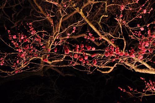 夜の偕楽園・夜梅祭2012-07