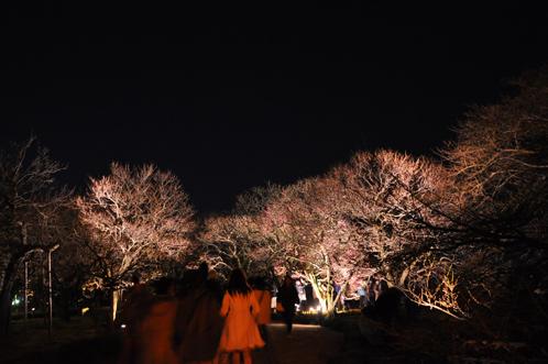 夜の偕楽園・夜梅祭2012-08