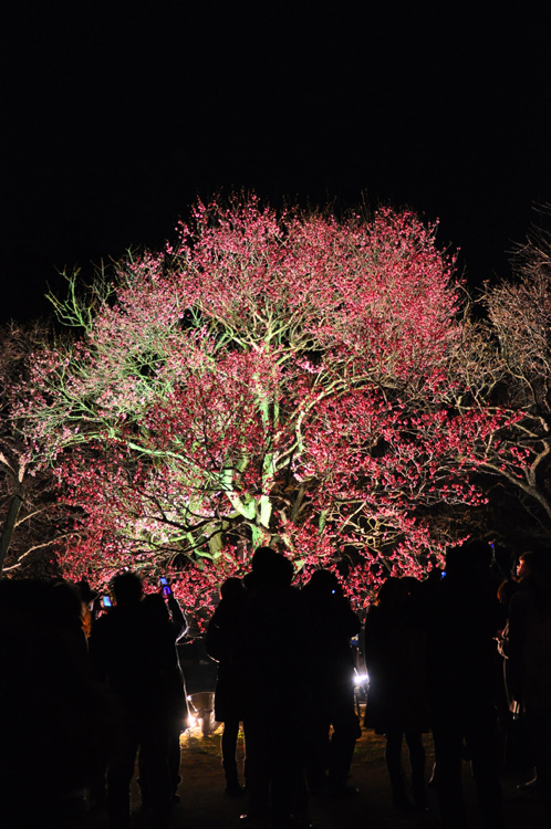 夜の偕楽園・夜梅祭2012-12