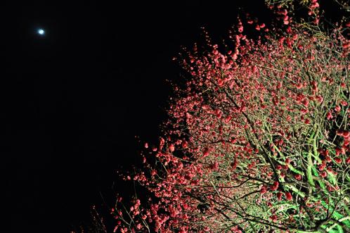 夜の偕楽園・夜梅祭2012-14