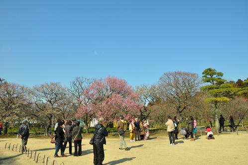 2012年(平成24年)3月14日の偕楽園・梅の開花状況04