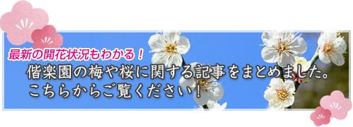 偕楽園の梅や桜に関する情報をまとめてみました_バナー