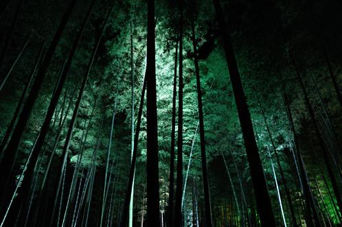 夜梅祭2013水戸偕楽園08