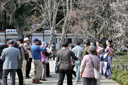 2013年3月8日水戸市偕楽園の梅は3割が開花03